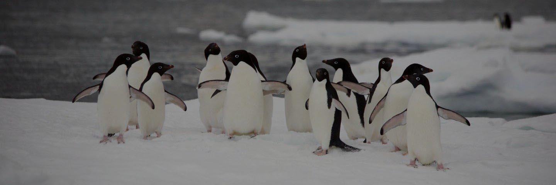 banner-091219-bv-penguins-33-2693-3-1-dark