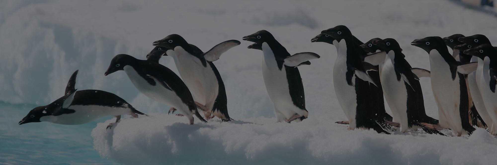 banner-Antarctic-penguin-02-3-1-dark