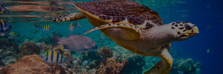 banner-Hawksbill-Turtle-dark-3-1