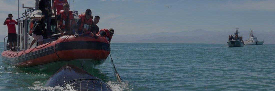 banner-whale-rescue-3-1-dark