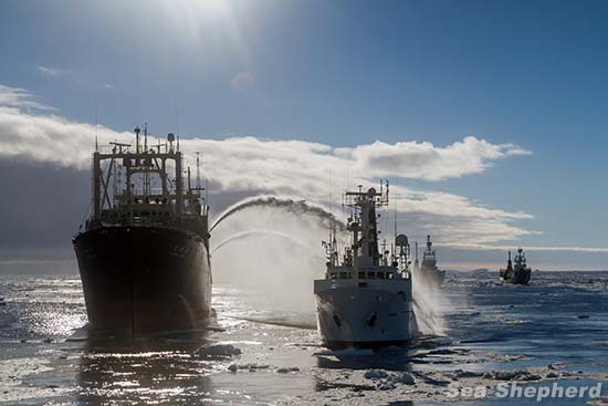 Nisshin Maru fires water cannons on the Sam Simon