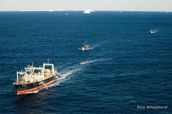 Bob Barker and Steve Irwin Escorting the Nisshin Maru Out of the Southern Ocean Whale Sanctuary