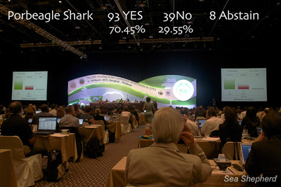 The Porbeagle Shark vote