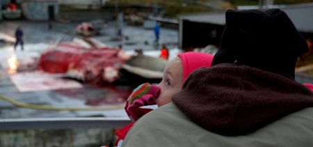 A young child holds their nose as the processing of whales goes on