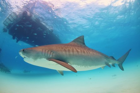 Réunion Island has announced it plans to kill 94 Bull and Tiger sharks