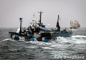 Yushin takes Bob Barker Away from Nisshin Maru during Operation Relentless