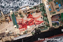 The grisly blood-smeared deck of the Nisshin Maru