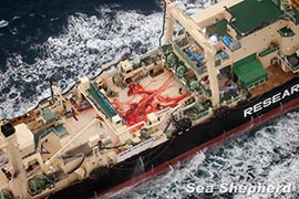 The bloody decks of Japan's commercial whaling operation Photo: Tim Watters