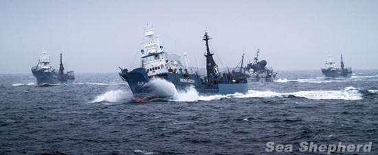 The Steve Irwin surrounded by the 3 harpoon vessels during a 9-hour attack on the Sea Shepherd ships Photo: Marianna Baldo