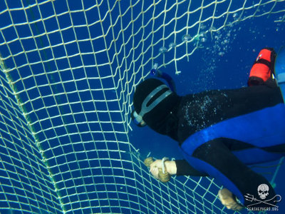 A diver cuts one of the tuna nets