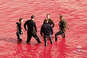 Over the years hundreds of Sea Shepherd volunteers have stood up in opposition to this barbaric massacre.	Photo: Eliza Muirhead