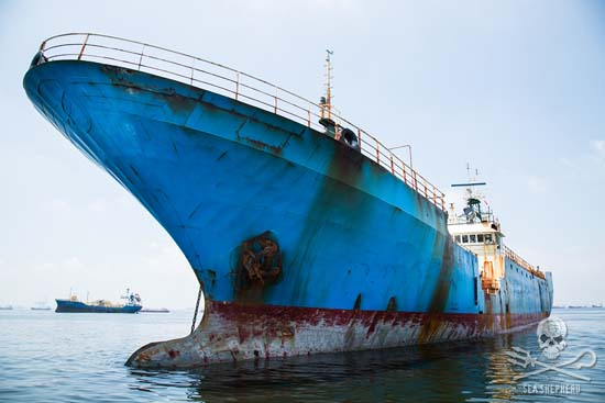 "The Viking, last of the ""Bandit 6"" toothfish poaching vessels, sails into Jakarta.	Photo: Eliza Muirhead"