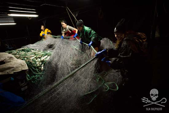 The crew of the Steve Irwin hauls illegal driftnets out of the Indian Ocean.	Photo: Tim Watters
