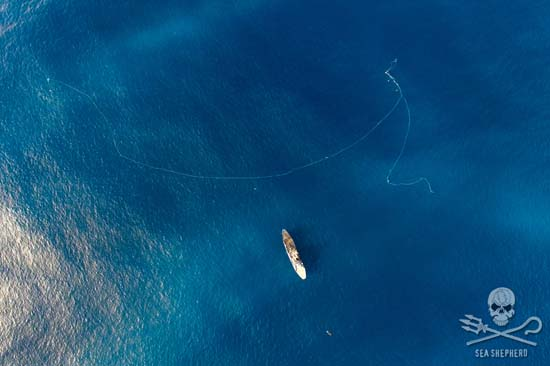 An aerial shot of one of the six Fu Yuan Yu poaching vessels shows the great length of the illegal driftnets. Photo: Tim Watters
