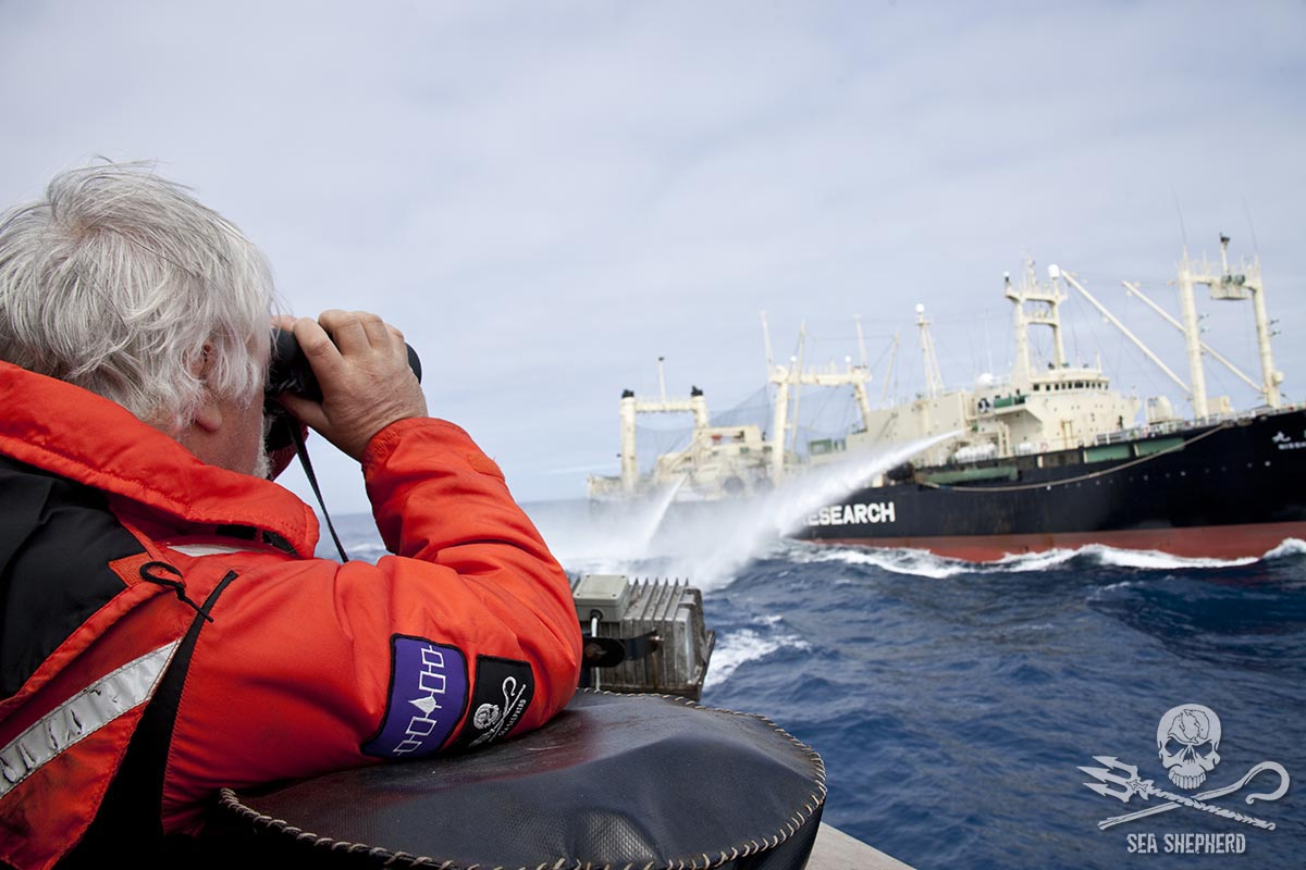 File: Captain Paul Watson look to Nisshin Maru with his binoculars