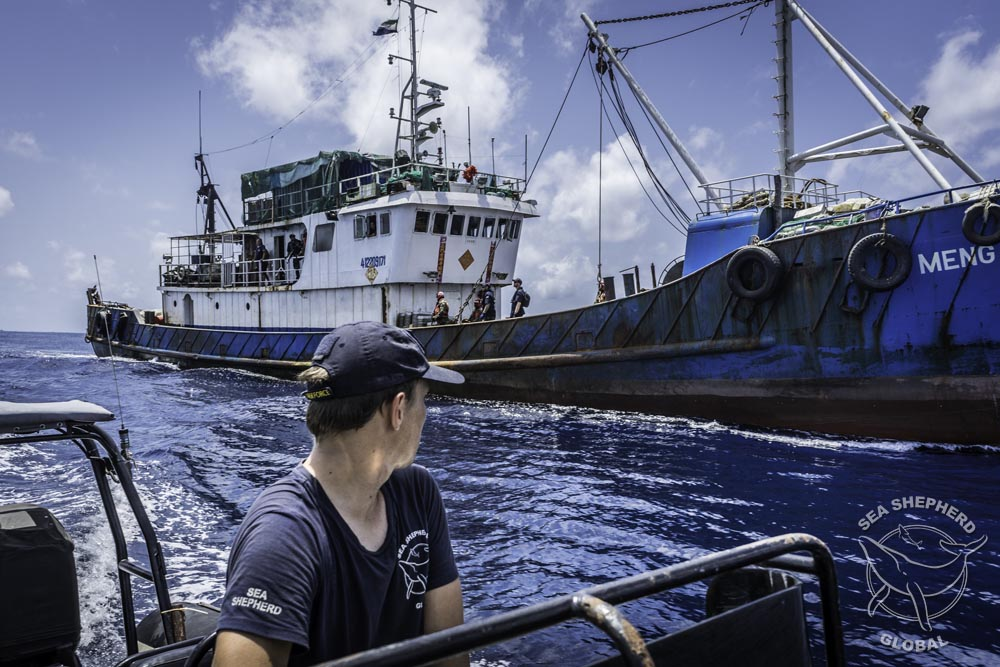 The Gemini alongside a fishing vessel under inspection. Photo: Sea Shepherd Global / Alejandra Gimeno