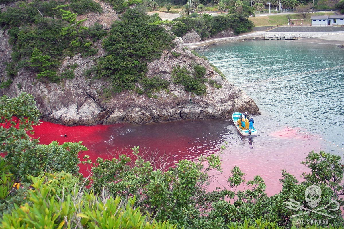 The bloody killing cove in Taiji