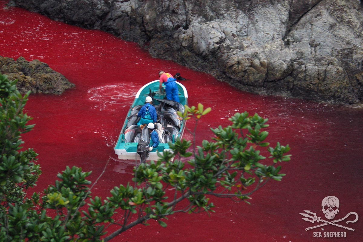 The bloody cove of Taiji