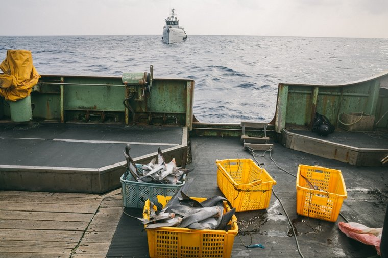 Shark fins on the deck of the Tai Hong 1 discovered during a boarding inspection. Photo by Jax Oliver / Sea Shepherd.