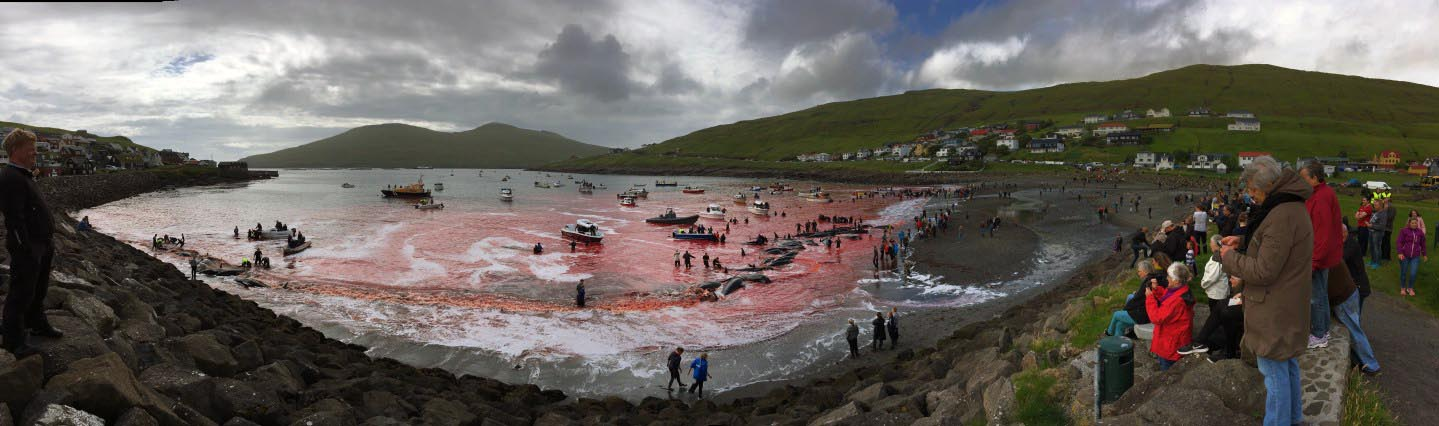 Murder Most Foul in the Faroe Islands