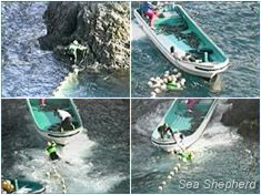 Sea Shepherd and Taiji