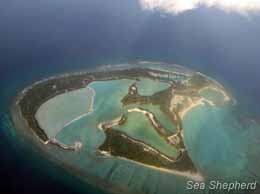 Nalandhoo island is being artificially modified for commercial harvesting of alien species of sea cucumber. Lagoons on the island have been affected by toxic discharge from this monoculture. Photo: NIOS