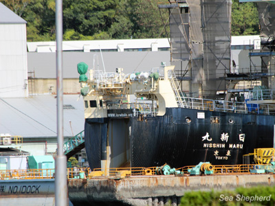 The Japanese whaling fleet's factory vessel, the Nisshin Maru