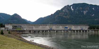 The biggest salmon killer of all, the Bonneville Dam on the Columbia River. Photo: Erwin Vermeulen