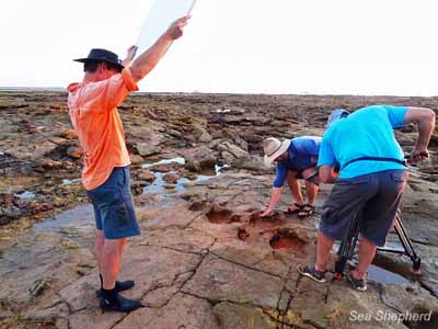 Catalyst Productions films the Stegosaur trackway found at James Price Point