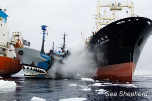 The Nisshin Maru rams the Steve Irwin as the Sea Shepherd fleet block whaling fleet's illegal refueling efforts