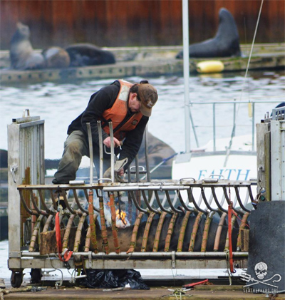 """Researcher"" Matthew Tennis catches the fur of a sea lion on fire during branding, Port of Astoria - March 24, 2013"