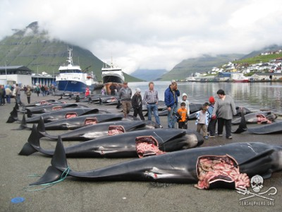 After being systematically (ritualistically?) slaughtered, the gutted pilot whales are lined up along the docks as families parade their children along the corpses