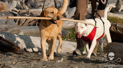 Retired Officer Manotas walking the beach of his new home in Friday Harbor, Washington, with his new sister Sally.