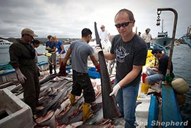 Alex Cornelissen and results of illegal shark finning