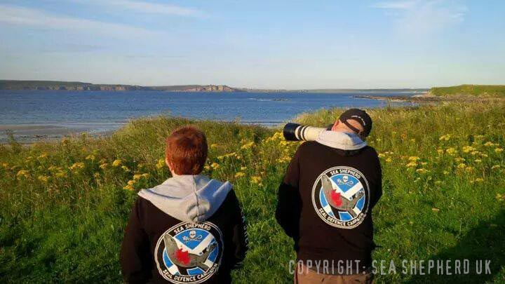 Sea Shepherd UK campaign crewmember watching over the coastline and seal haulouts near Castletown, Dunnet bay.