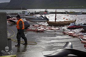 The stranded whales were reduced to butchered meat