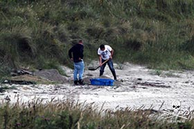 Two Scottish Wild Salmon Company employees burying the contents of a blue crate in West Murkle beach