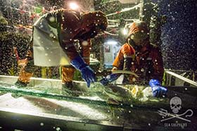 Crewmembers haul a decayed toothfish in extreme conditions.  Photo: Jeff Wirth