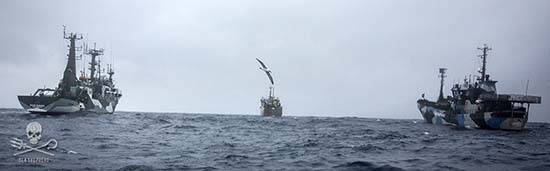 Sea Shepherd ships, Bob Barker and Sam Simon, in pursuit of the Interpol-wanted poacher, Thunder. Photo: Jeff Wirth