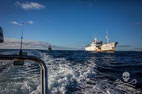 The Sam Simon pursued Kunlun out of its hunting grounds in the Southern Ocean. Photo: Jeff Wirth