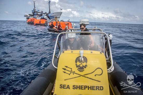 The Sea Shepherd small boat tow a convoy of liferafts back to the safety of the Sam Simon. Photo: Jeff Wirth