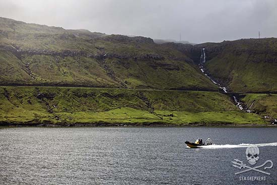 The bloody slaughter of the grind is a stark contrast to the natural beauty of the Faroe Islands. Photo: Enric Gener