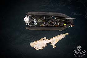 The carcass was measured at 5.6 meters long, a similar length to the small boat. Photo: Sea Shepherd