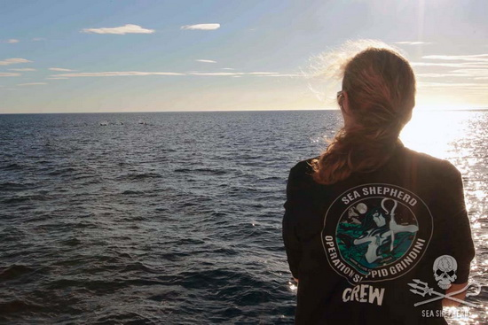 Capt. Lublink oversees as the Sea Shepherd ships lead a pod of dolphins away from the Faroe Islands and back out to sea. Photo: Sea Shepherd