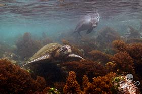 Galapagos was the first site to be included on the UNESCO World Heritage List. Photo: Sea Shepherd/Tim Watters
