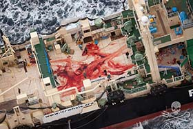 The bloodied deck of the Nisshin Maru, stained from the butchering of a whale. Photo: Tim Watters