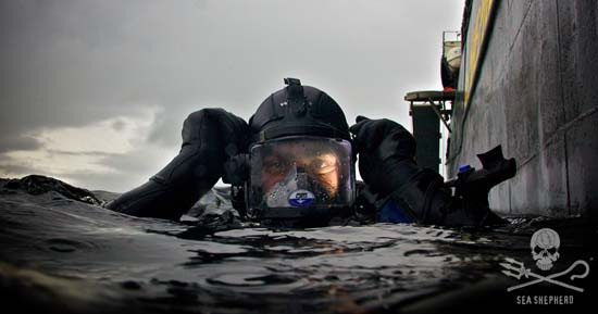 Through Sea Shepherd Dive, divers and dive operators can report environmental crimes. Photo: Gary Stokes