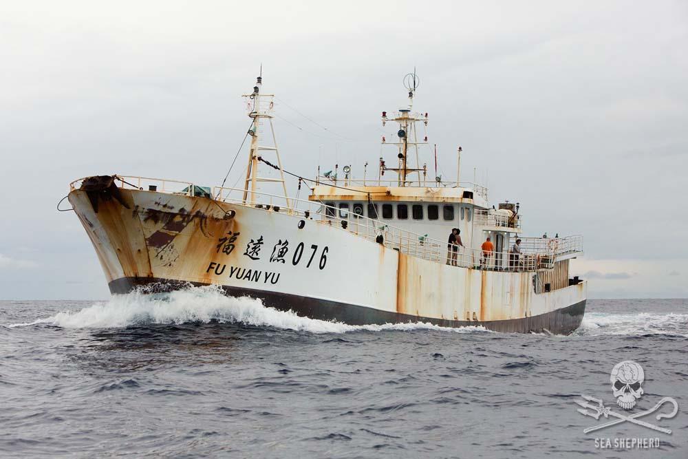 sea shepherd onshore volunteer application