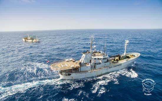 The Bob Barker will be working with the Government of Gabon to tackle illegal, unregulated and unreported (IUU) fishing. Photo: Lukas Erichsen