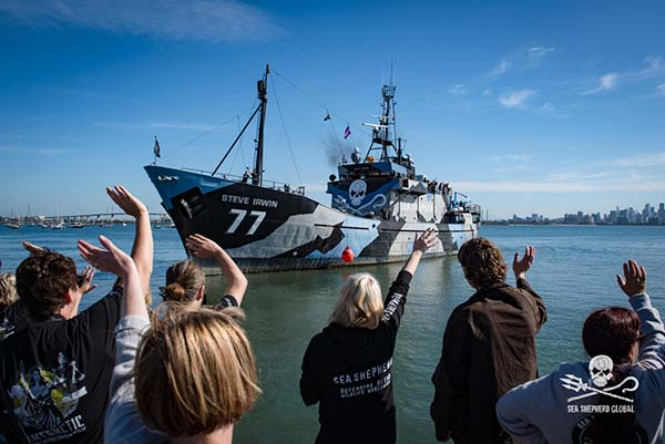 Steve Irwin departing from Seaworks, Williamstown in Melbourne, Dec 3rd. Photo: Sea Shepherd Global/Nelli Huié